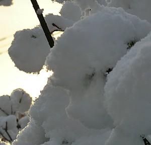 2010年初積雪が仙台にやってきた